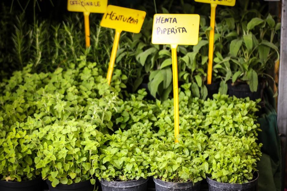 roma: il farmers market