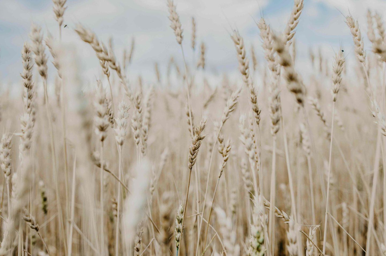 tipologia e forza della farina
